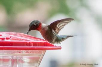 Best Birds-219