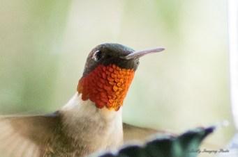 Best Birds-221
