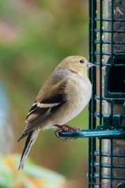 Best Birds-33