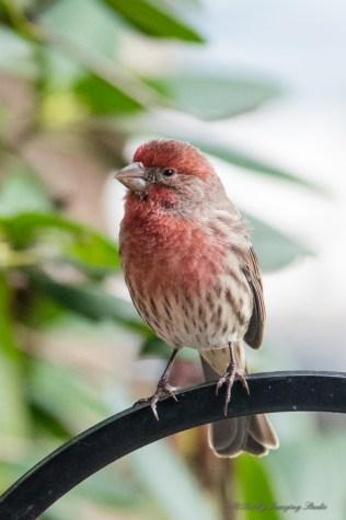 Best Birds-42