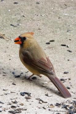 Best Birds-48