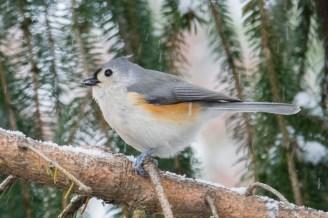 Best Birds-52