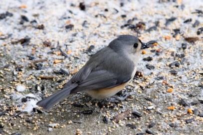 Best Birds-62