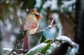 Best Birds-66