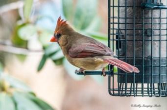 Best Birds-68