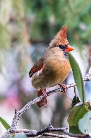 Best Birds-69