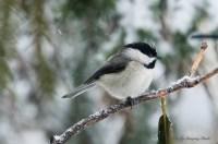 Best Birds-78