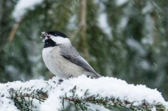 Best Birds-79