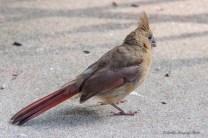 Best Birds-92