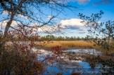 Atlantic County Park - Estell Manor - 03