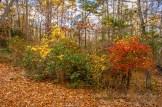 Atlantic County Park - Estell Manor - 06