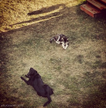 Lila and Shadow, Red Lodge.