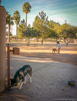 Reid Dog Park in Tucson became a daily favorite.