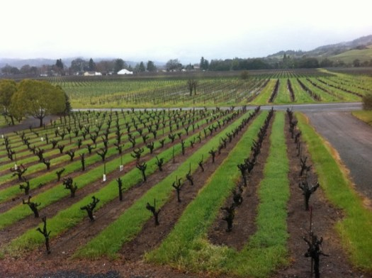Wine march 1