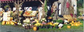 Farmstand in the Fall