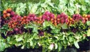 An artful display of beets