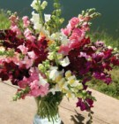 Some lovely snapdragons, available this season again