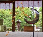 A bit of autumnal ikebana