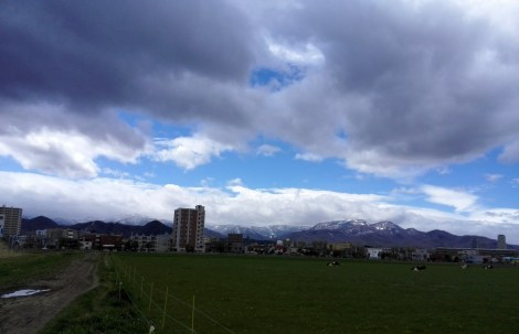 Cows, grass, snow-capped mountains; must be Hokkaido.