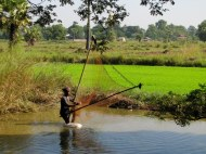 Fishing in the rice fields