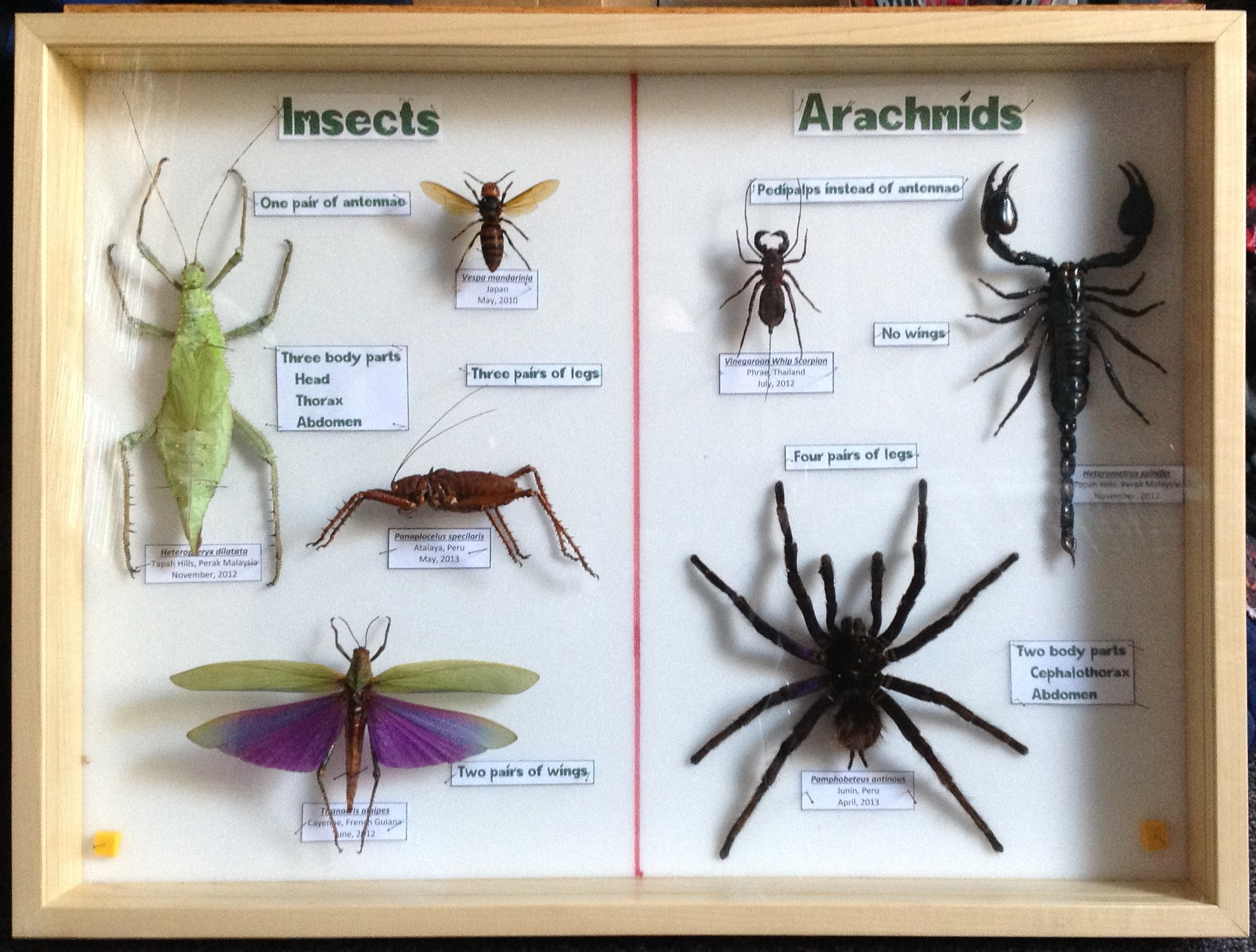 Entomological Displays