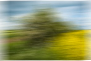Hedgerow-in-a-Blur--D750-21052017-(8)
