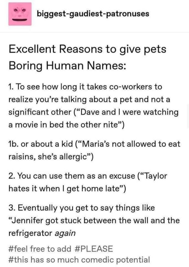 Reasons to give your pets boring, human names