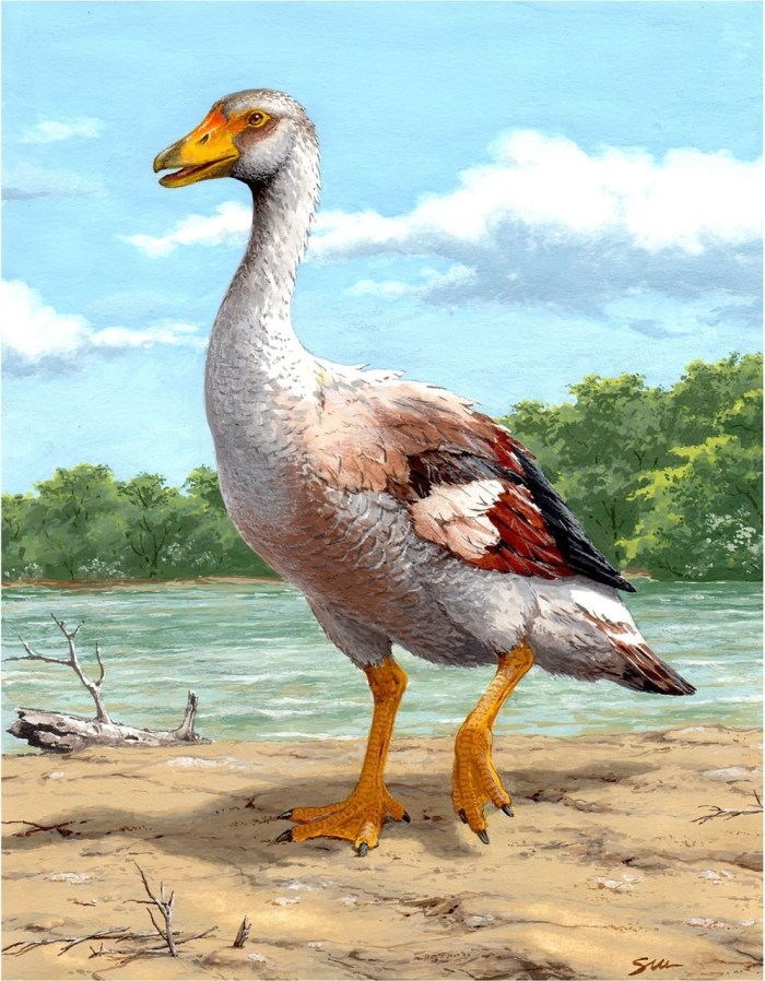 Gargornis ballmanni. A goose big enough to eat your poodle and shit it on your carpet.
