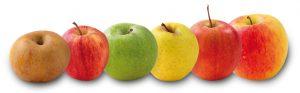Ça va être long, voici une pomme pour vous donner du courage !