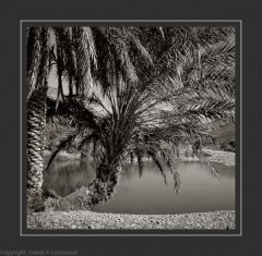 Palm & water Warm Tone