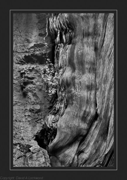 Tree Root & Plant Warm tone