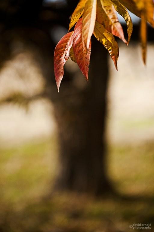 Orange Leaves Against Trunk