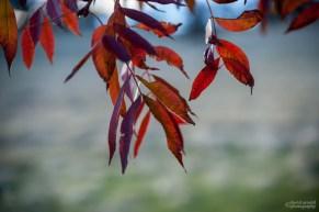 Purple and Orange Leaves, Afternoon