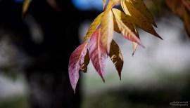 Purple and Orange Leaves Against Trunk