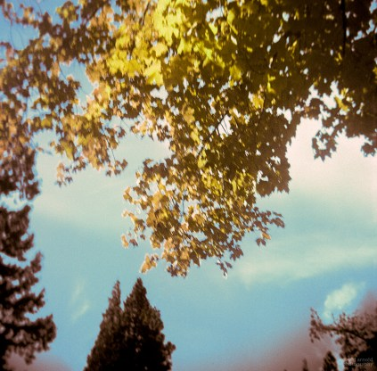 Trees and Sky, North Bloomfield, California