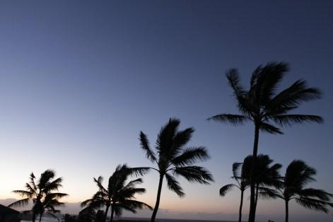 palms_blowing.jpg