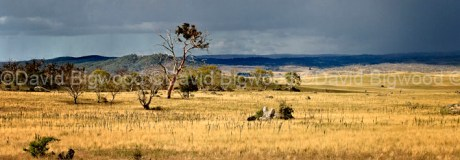 Australia: Storm clouds near Berridale, Snowy Mountains, NSW
