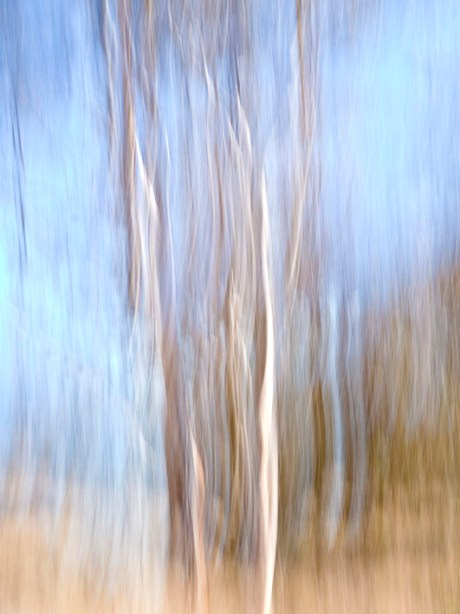 Abstract saplings