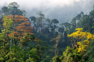 Forests of Vietnam