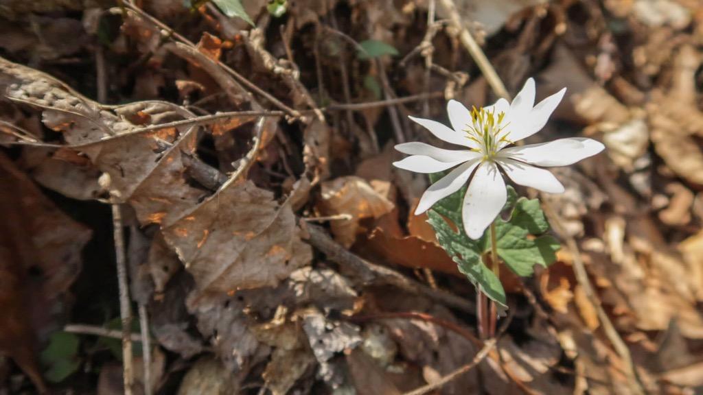 White flower forest floor david bourne