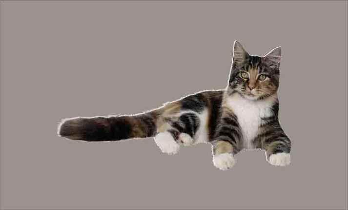 Gatos coleção imagens transparentes PNG