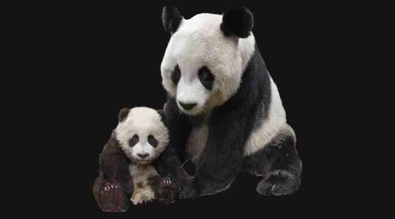 Pandas PNG