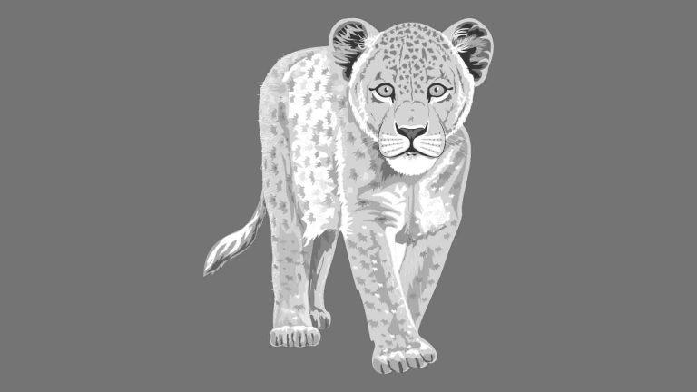 Desenho Animais Selvagens Coleção AI e CDR