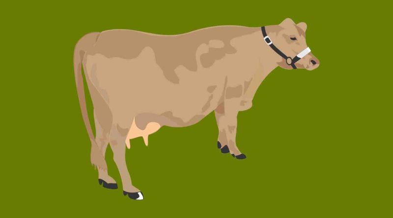 Animais Fazenda