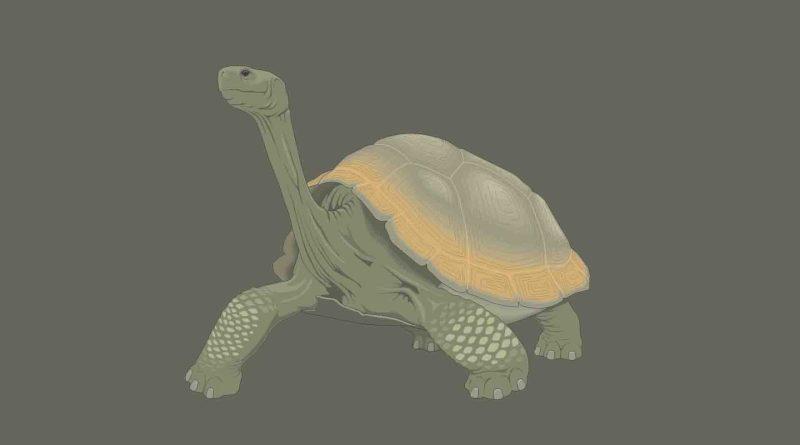 Réptil Tartaruga