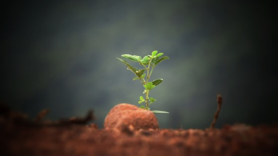 Stages_of_Entreprenurial_Growth_David_DeWolf_1200x675