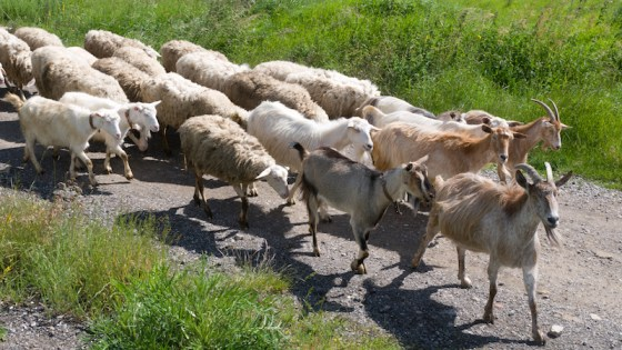Do You Really Agree or Are You Following the Herd - David DeWolf