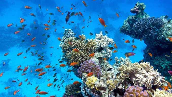 barriere de corail australie
