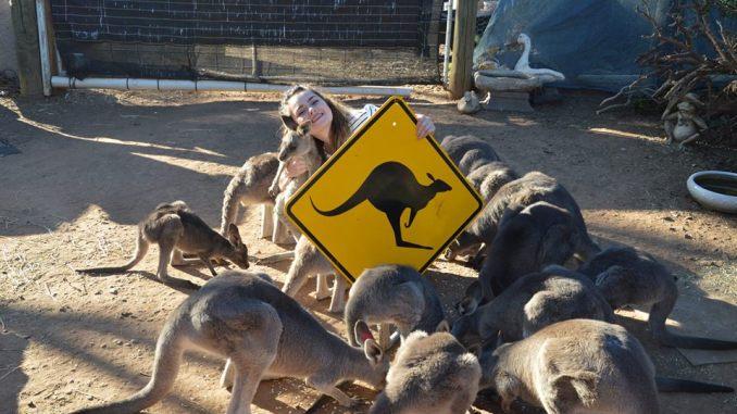 Chanelle a été bénévole dans un refuge de kangourous