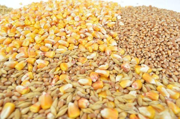 Tiempo de Cocción de los Cereales